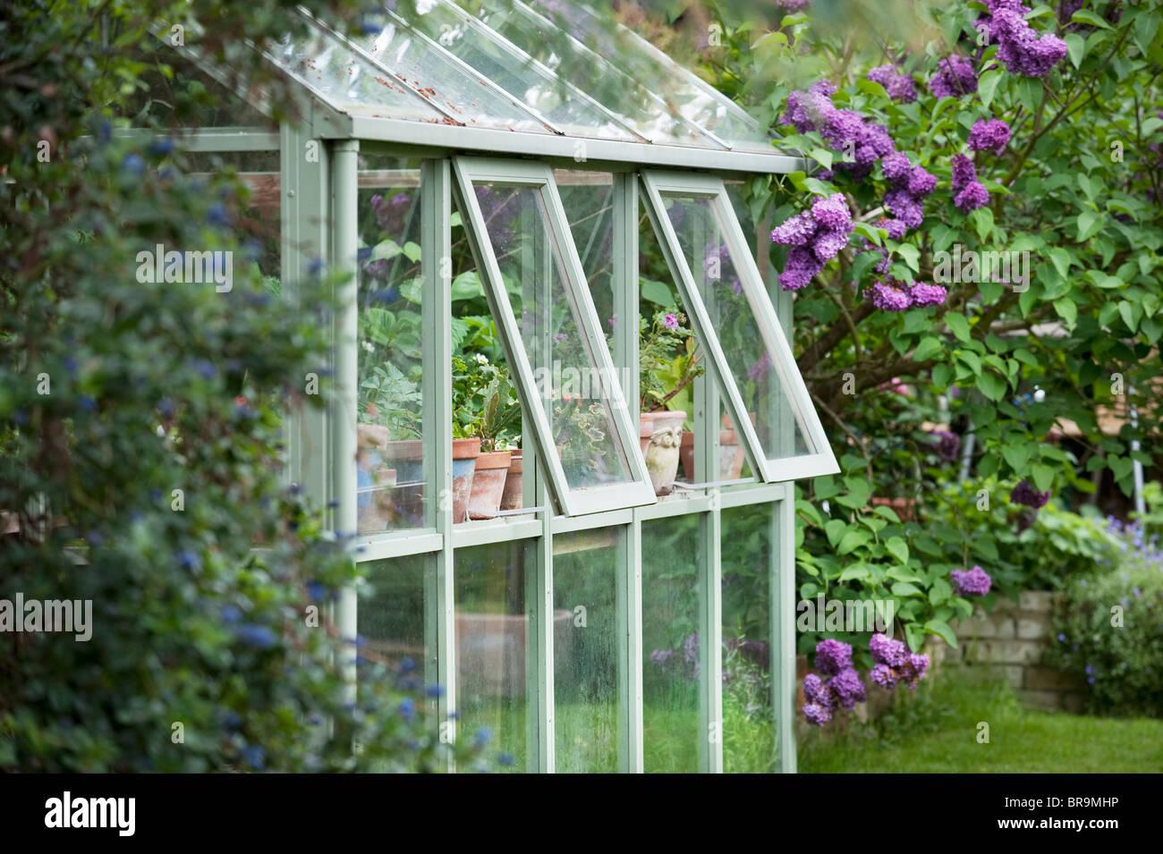 En serre jardin arrière avec fenêtres ouvertes pour la ventilation Photo Stock