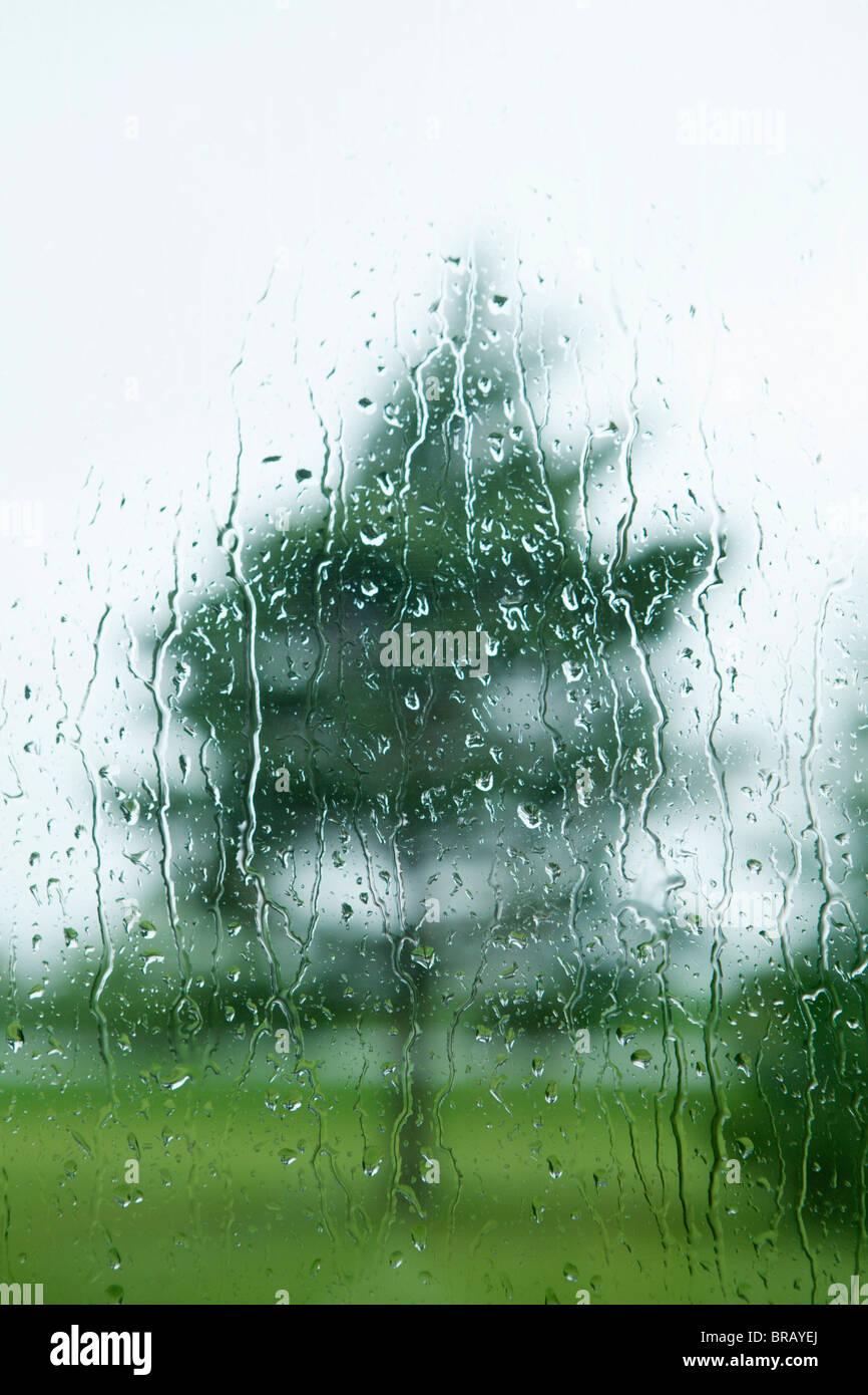 Gouttes de pluie sur la fenêtre avec un arbre à l'extérieur; Thunder Bay, Ontario, Canada Photo Stock