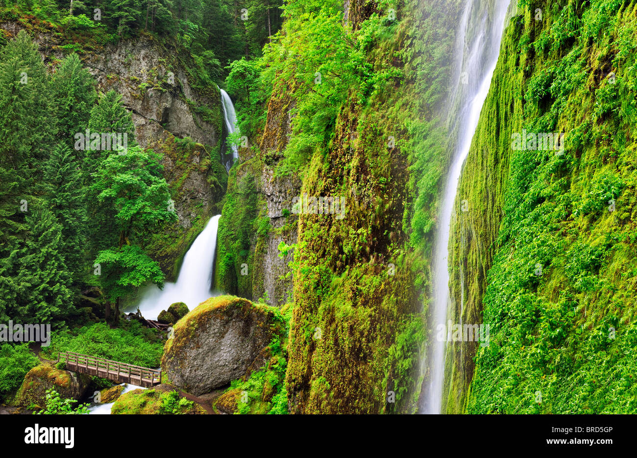 Tanner Creek Falls avec pont. Columbia River Gorge National Scenic Area, New York Photo Stock