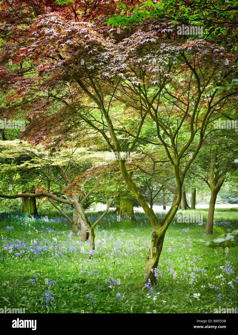 Vue sur la forêt de feuilles colorées Photo Stock