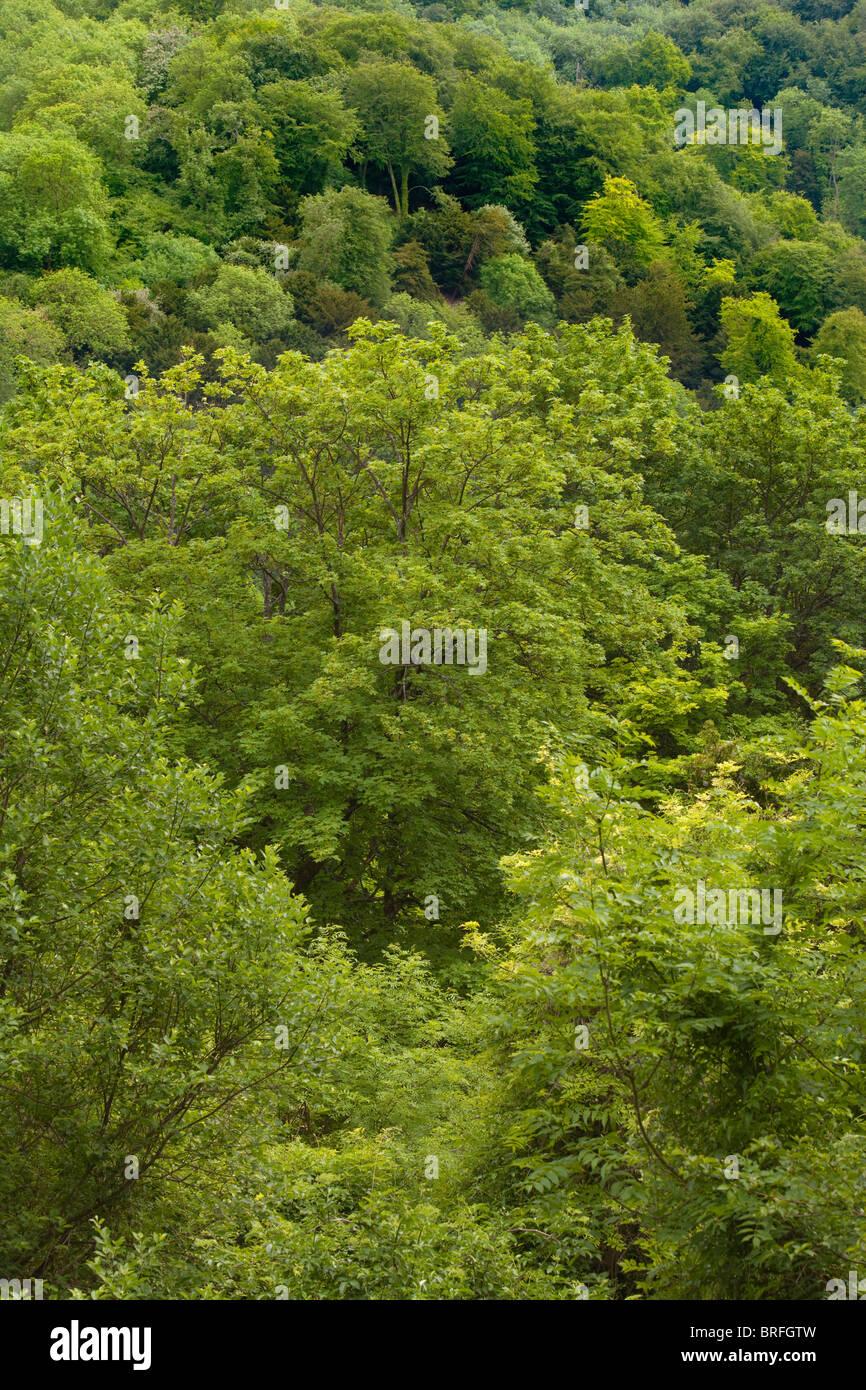 Regardant vers le bas sur une zone de forêt dans la région de Hampshire UK. Photo Stock