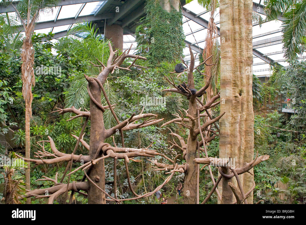 Henry Doorly Zoo Jungle - menti Photo Stock