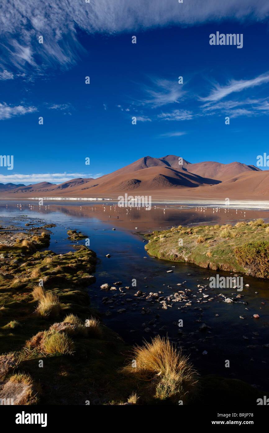 La Laguna Colorada, Eduardo Avaroa, Réserve nationale de faune andine Bolivie Photo Stock