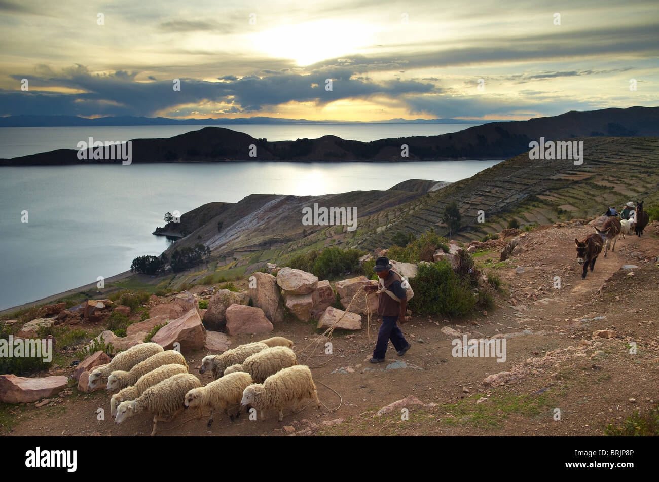 Un agriculteur avec son mouton sur l'Isla del Sol, le Lac Titicaca, en Bolivie Photo Stock