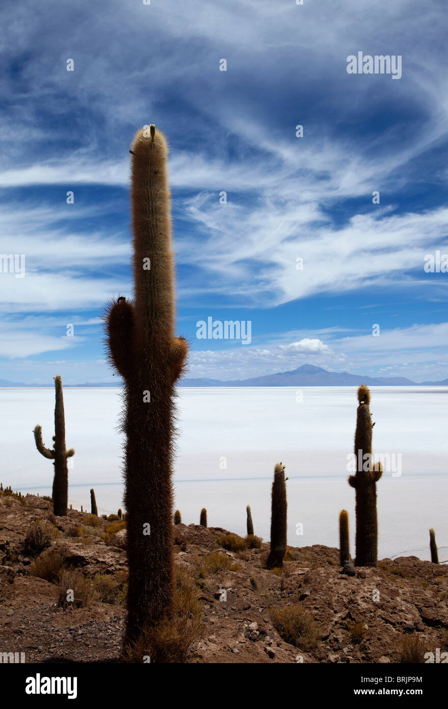Le Salar de Uyuni, Bolivie Photo Stock