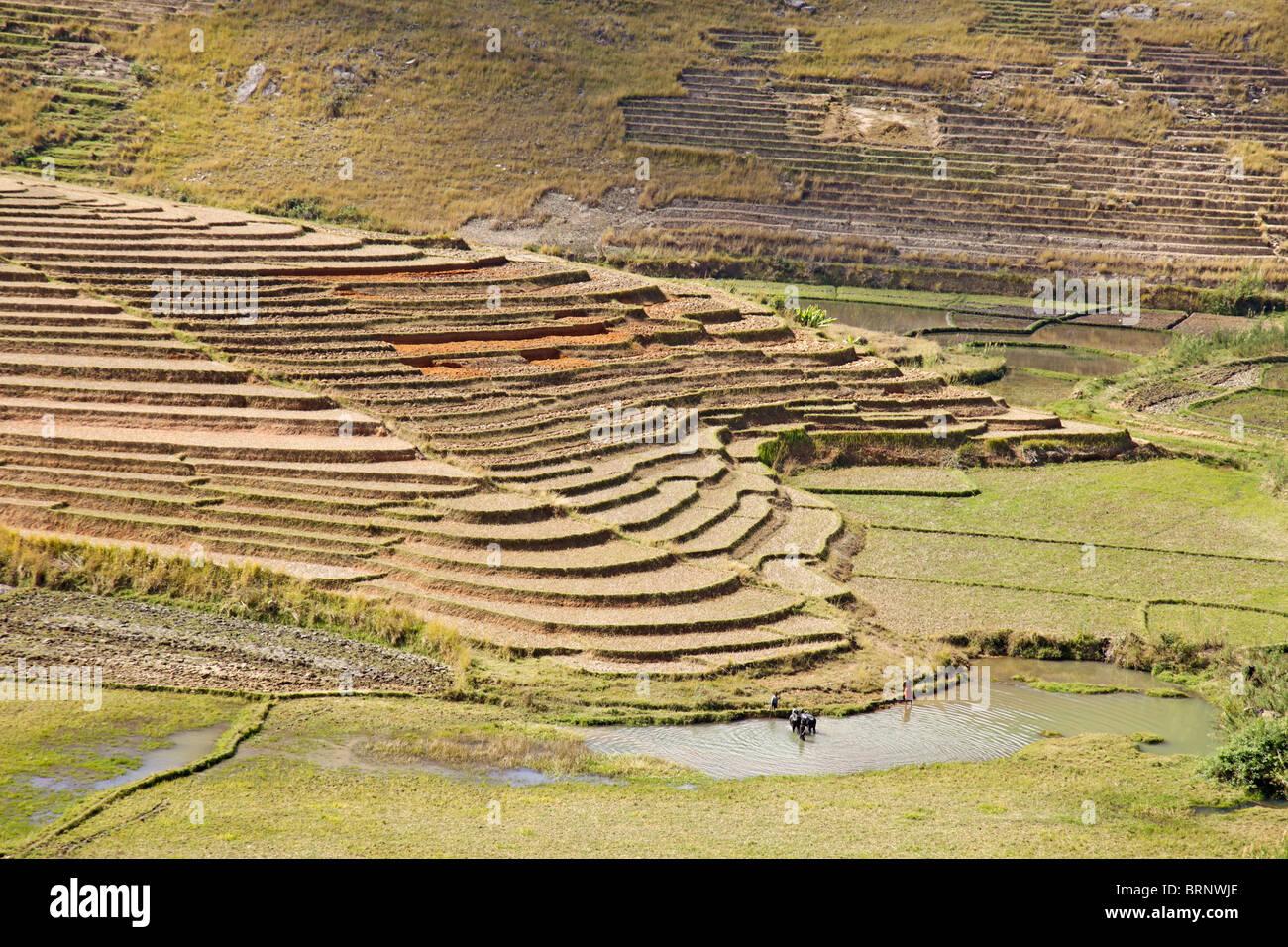Terrassement et paddyfields dans les hauts plateaux du centre ou de Madagascar Photo Stock