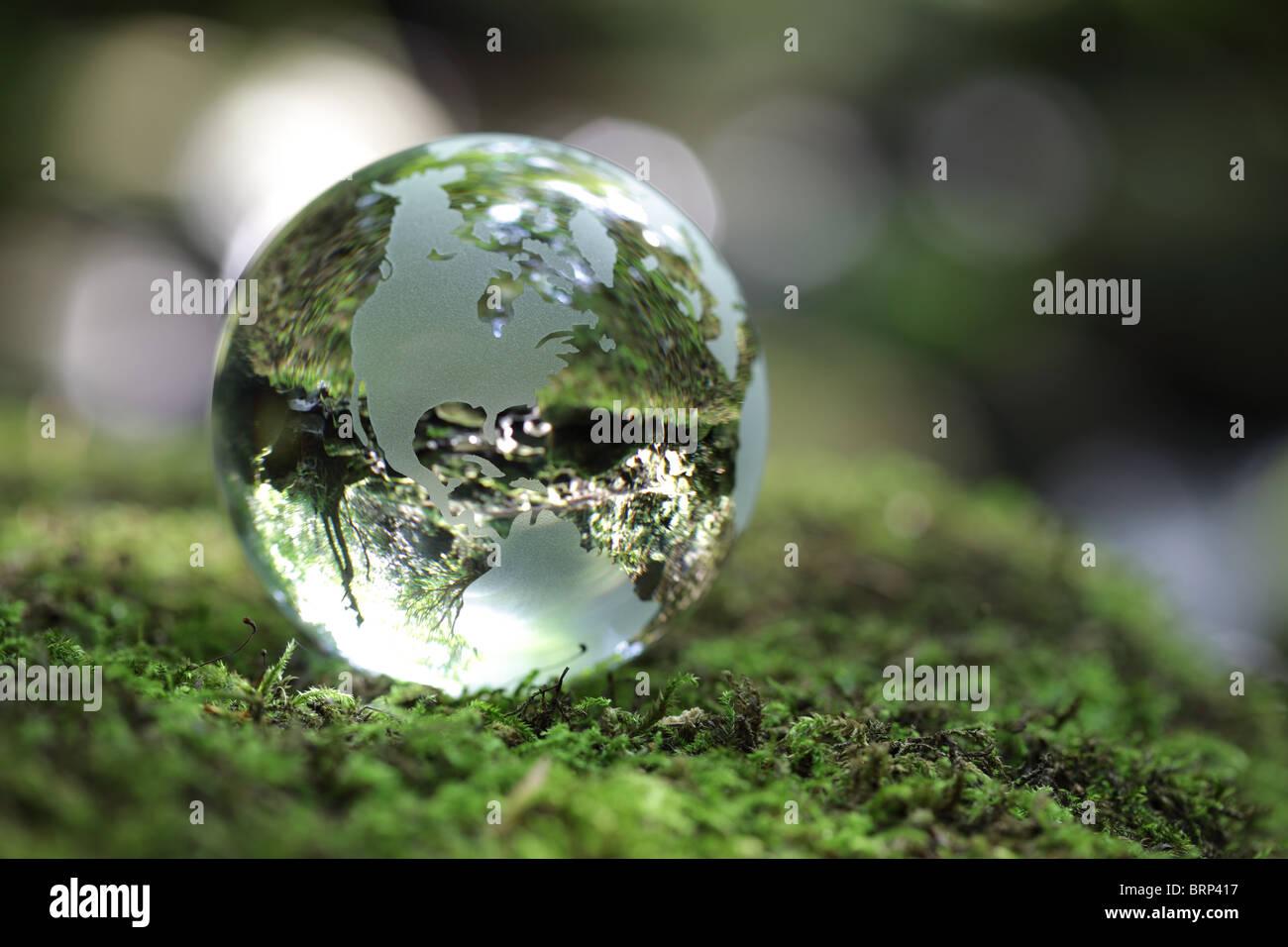 Globe dans la forêt Photo Stock