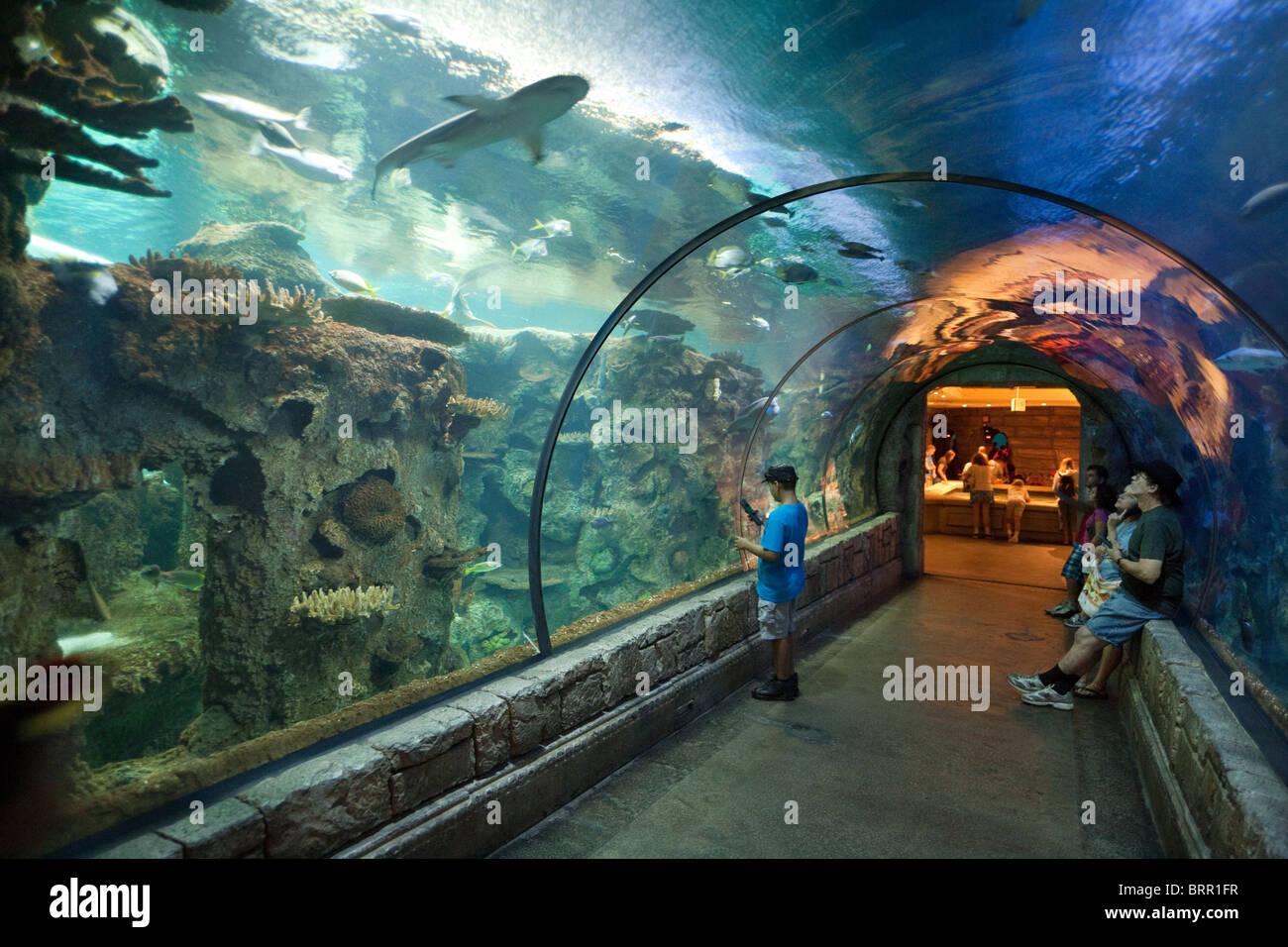 Les gens dans le tunnel des requins, regardant le Shark Reef Aquarium, l'hôtel Mandalay Bay, à Las Photo Stock