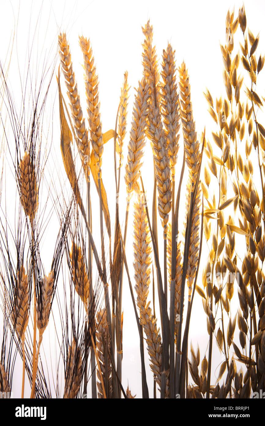 Grain Photo Stock