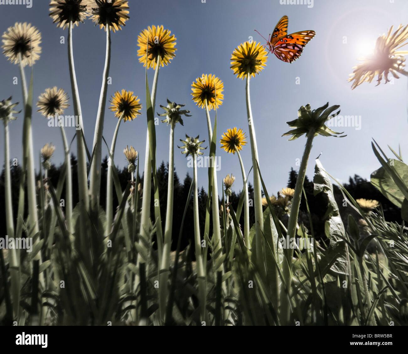 CONCEPT DE L'ENVIRONNEMENT: Printemps Meadow (Allemagne/Bavière) Photo Stock