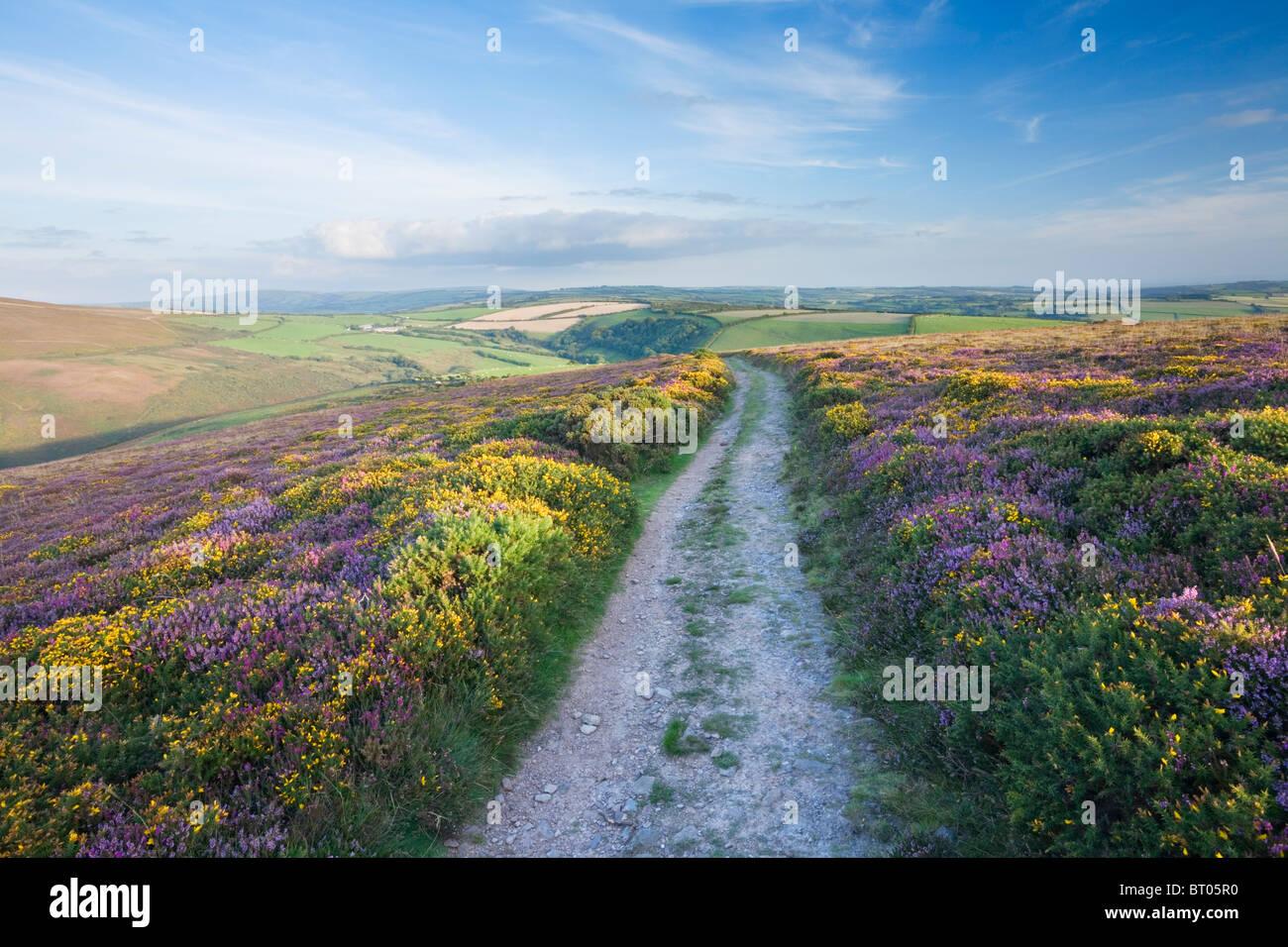 Le South West Coast Path sur grand bourreau. Parc National d'Exmoor. Devon. L'Angleterre. UK. Photo Stock
