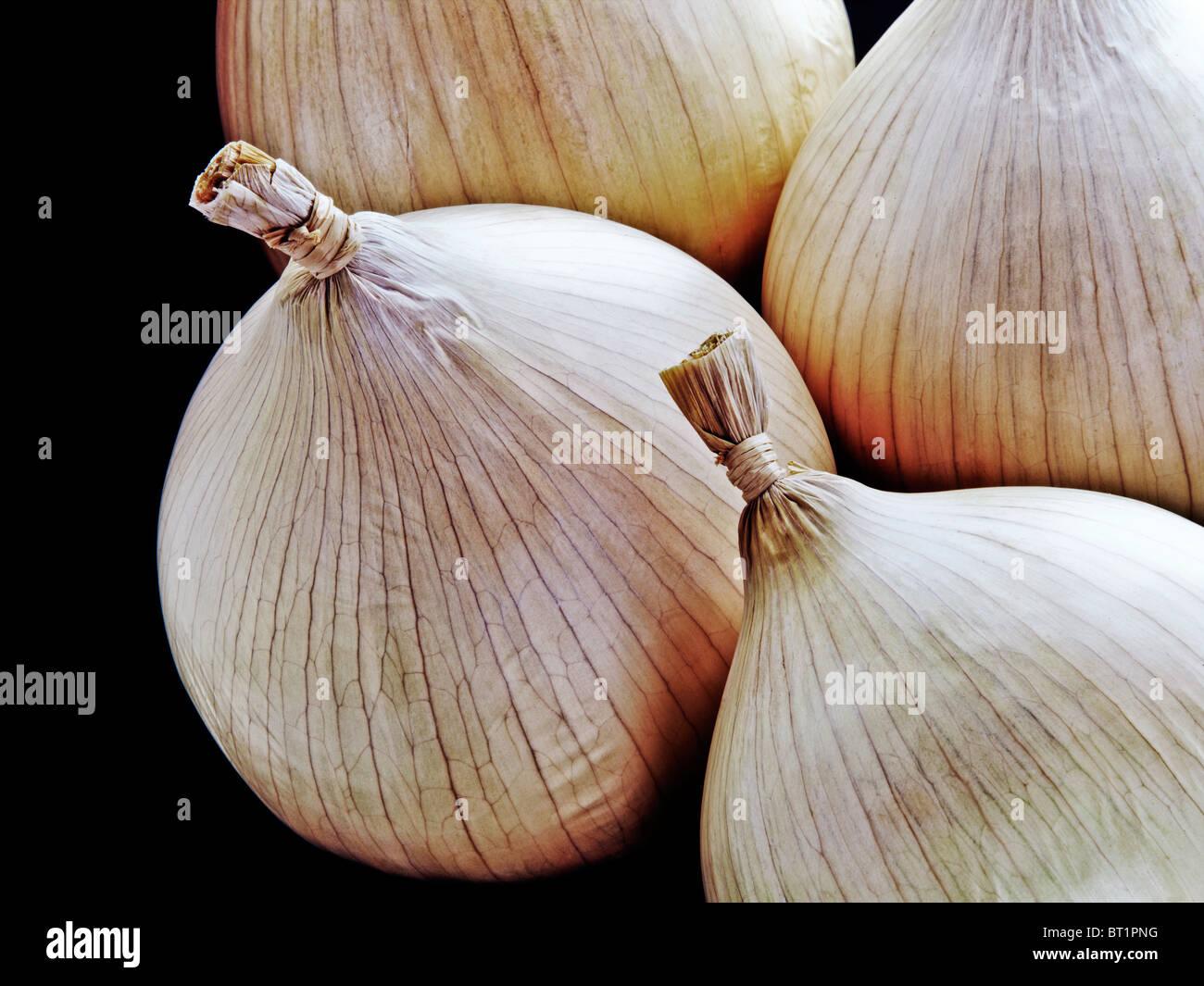 Oignons, still life Photo Stock