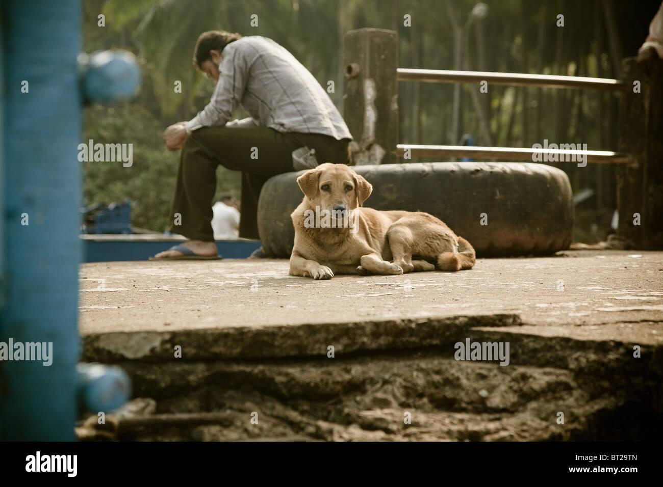Editorial photo de chien portant près de maître triste Photo Stock