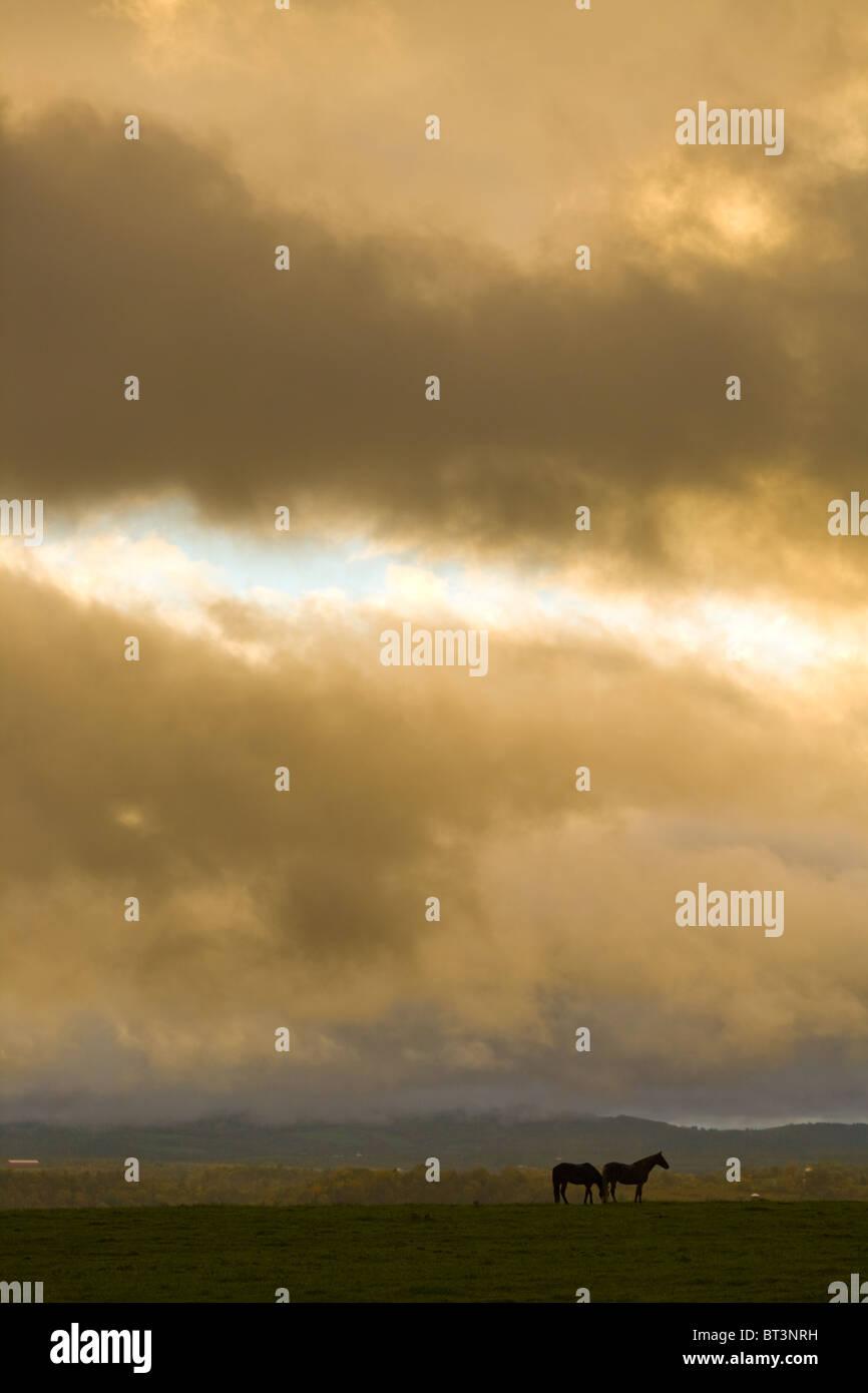 Chevaux sous ciel dégagé, ferme pays de la vallée de la Mohawk, l'État de New York Photo Stock