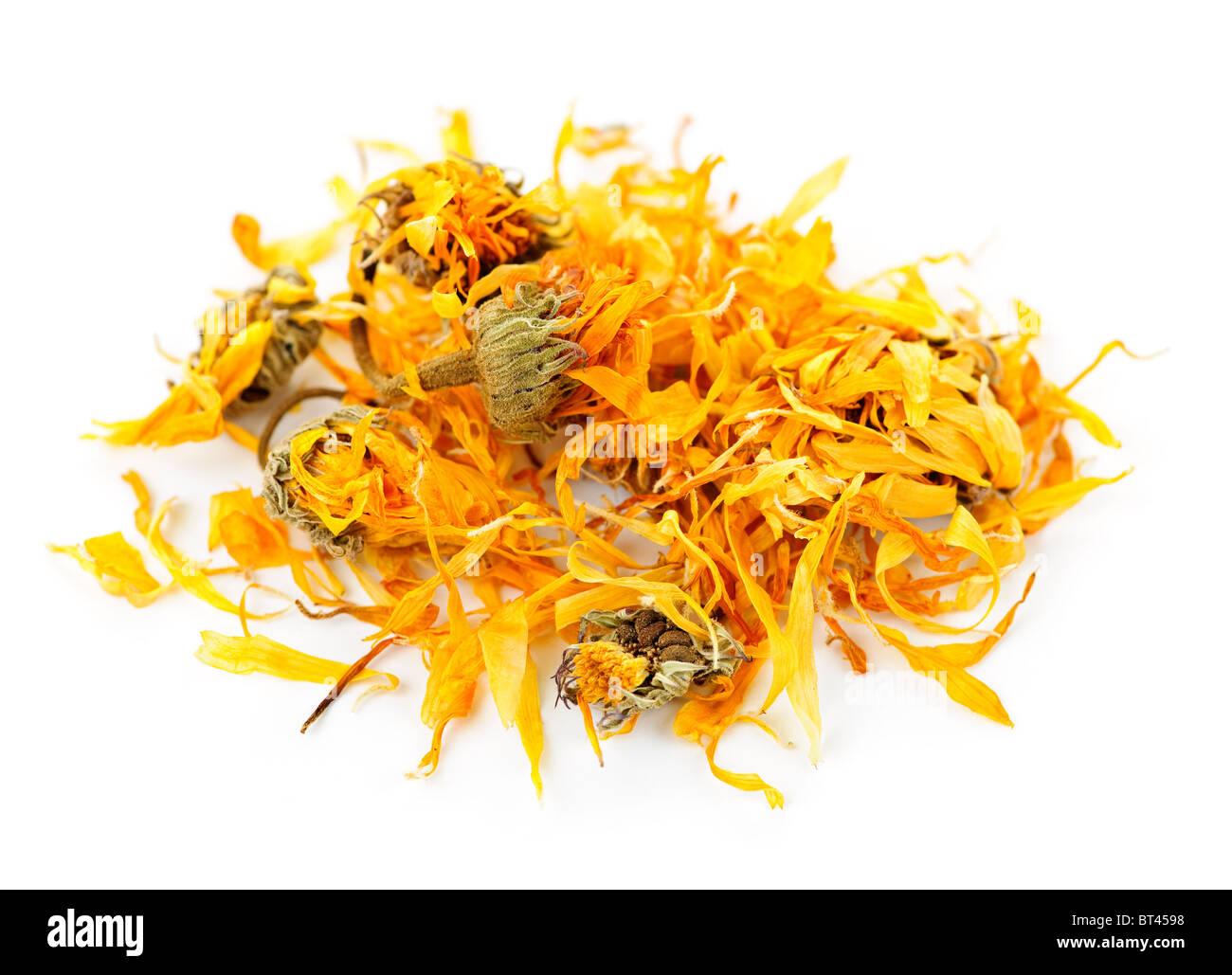 Le Calendula ou souci d'herbes médicinales sur fond blanc Photo Stock