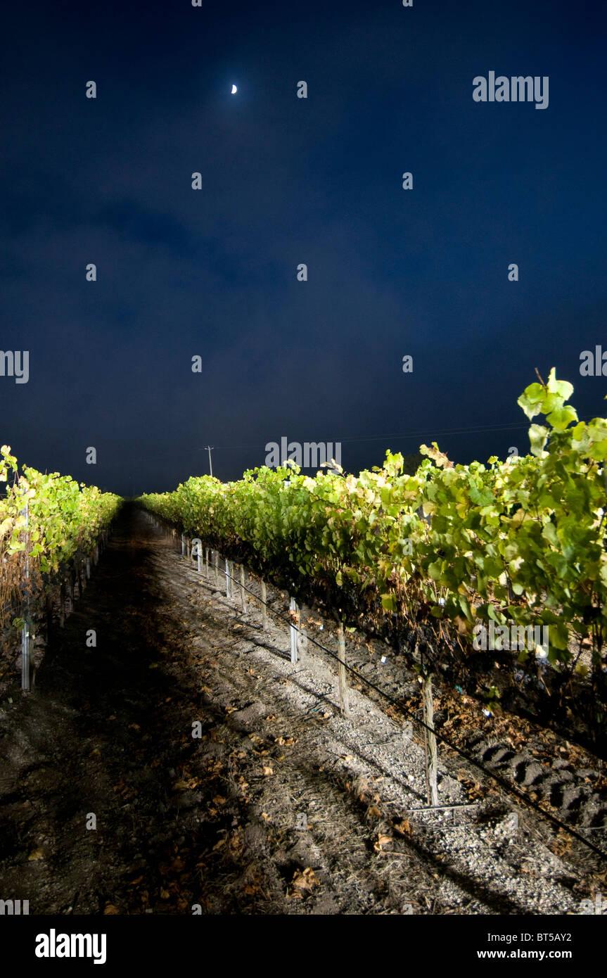 La nuit des vendanges à Laetitia Winery Santa Barbara comté près de Santa  Maria central California 60443b8e7615