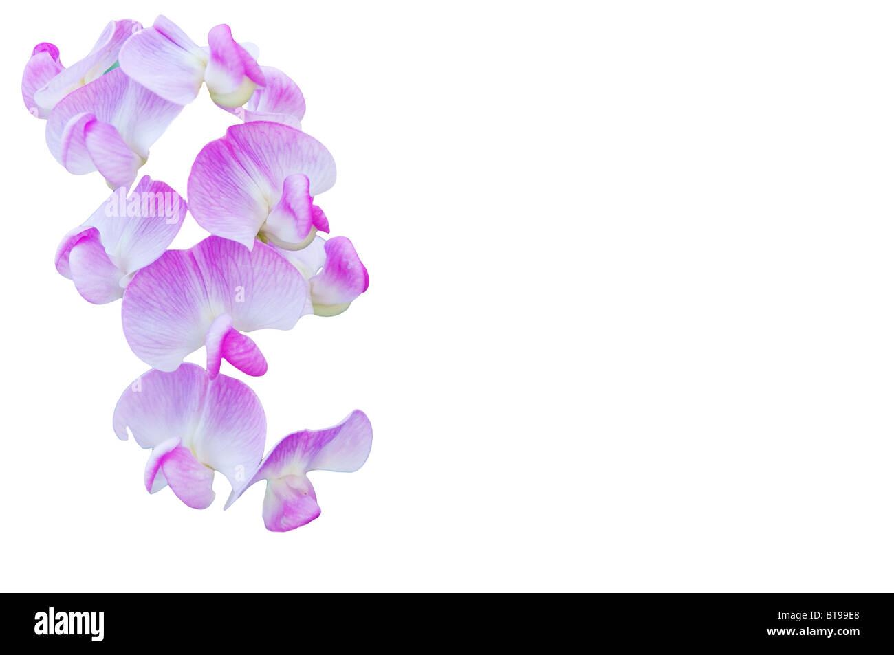 Tare commune sur un fond blanc Photo Stock
