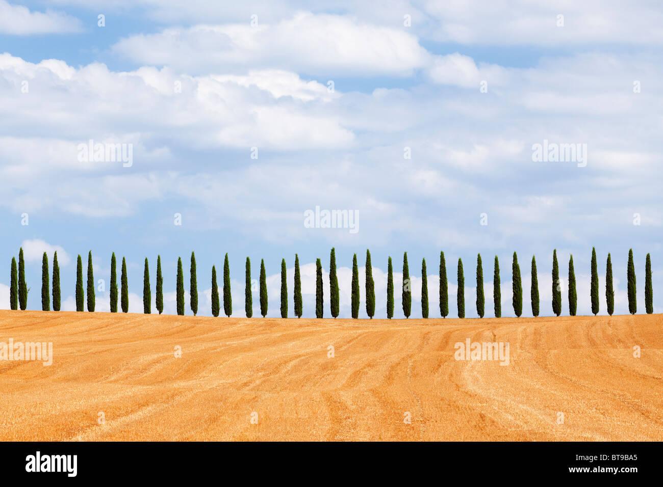 Cyprès sur la colline, Toscane, Italie Photo Stock