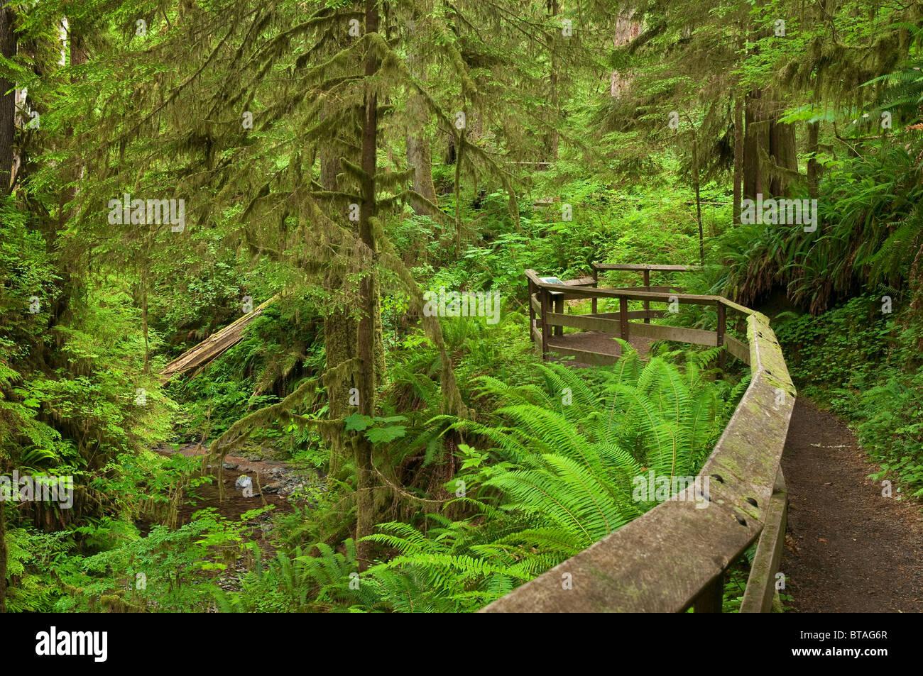 Quinault Rainforest Trail, Olympic National Forest, dans l'État de Washington. Photo Stock