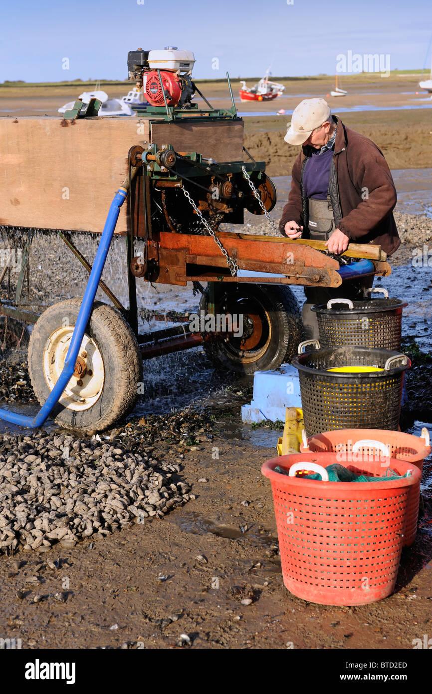 Les ramasseurs de moules - North Norfolk Coast Photo Stock