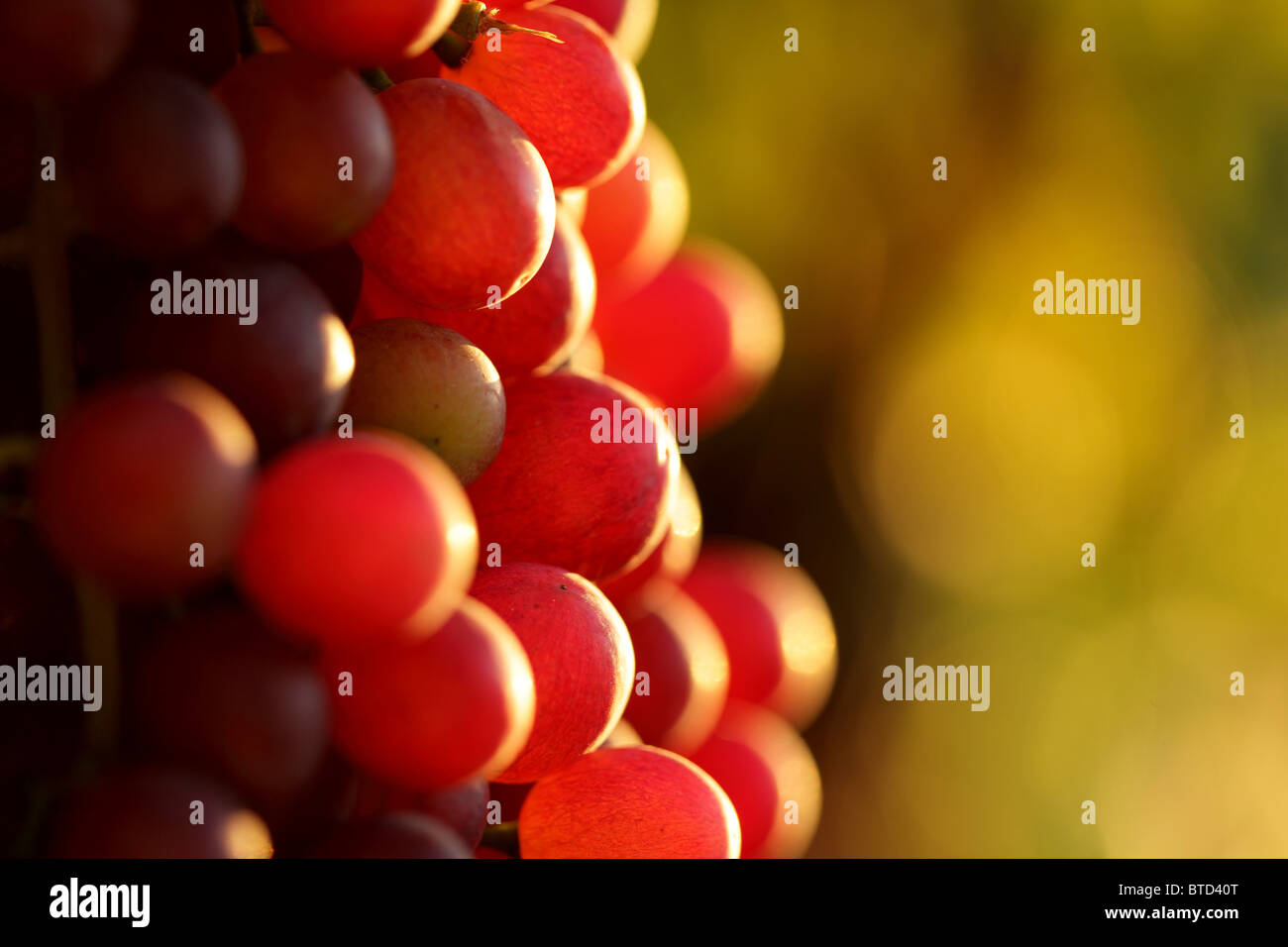 Raisins de cuve Photo Stock