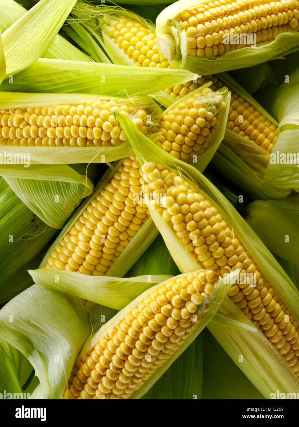 Les épis de maïs frais entier Photo Stock