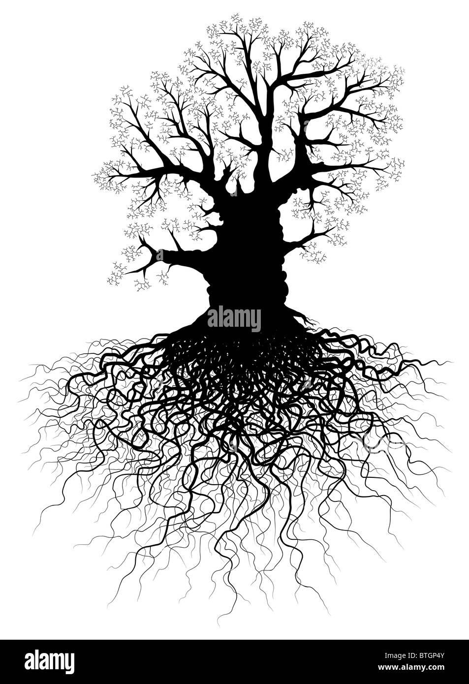 Arbre Avec Racine illustration d'un arbre de chêne sans feuilles avec système racine