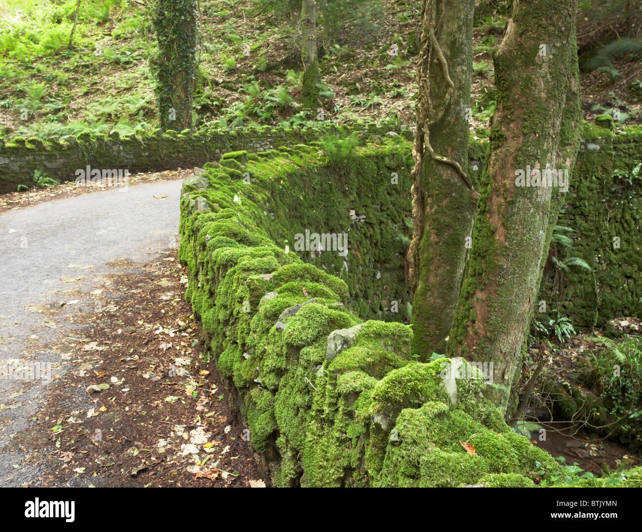 Pont couvert de mousse, Exmoor National Park, North Devon, England, UK Banque D'Images