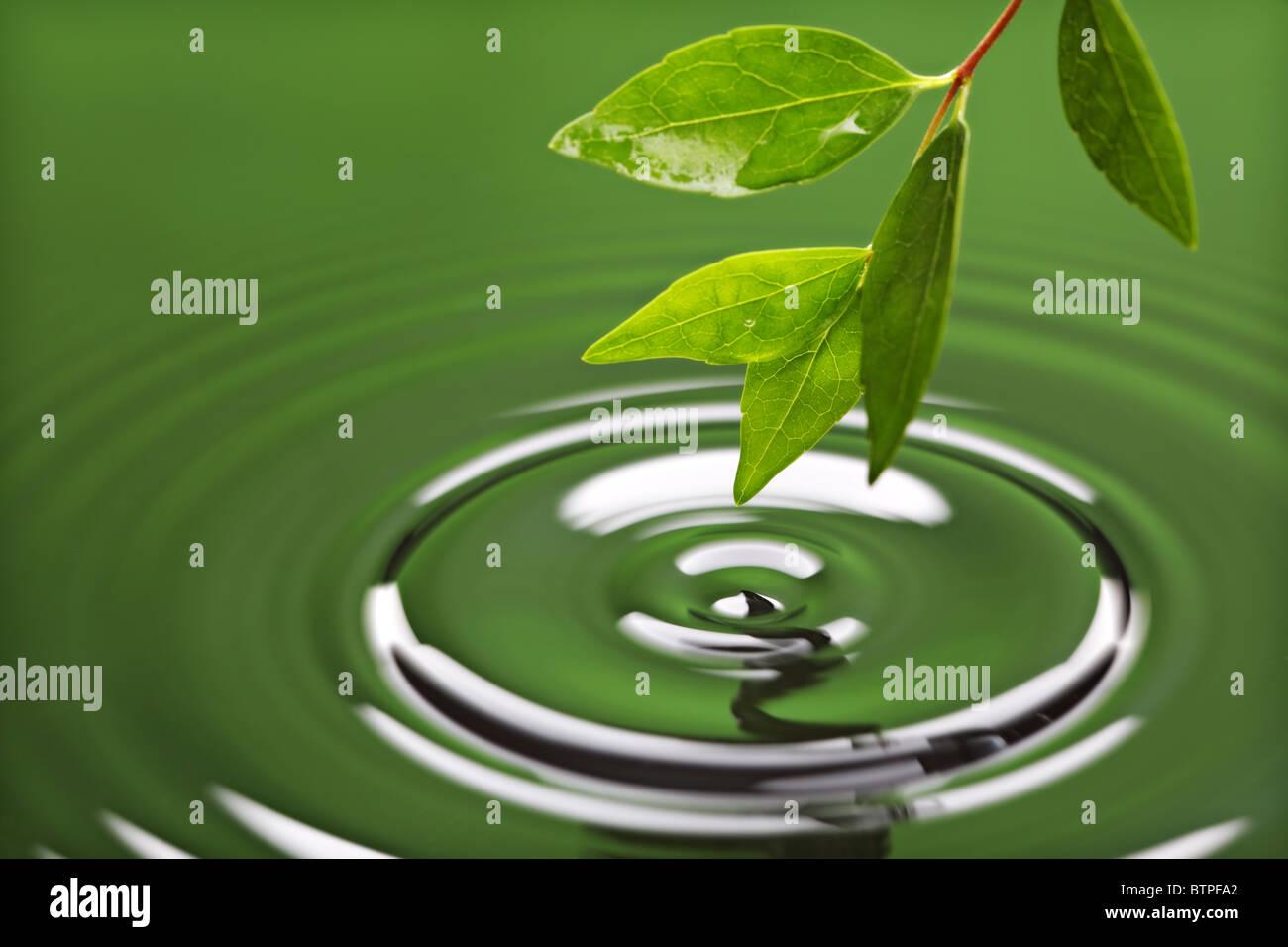 Ondulation de l'eau avec la feuille verte Photo Stock