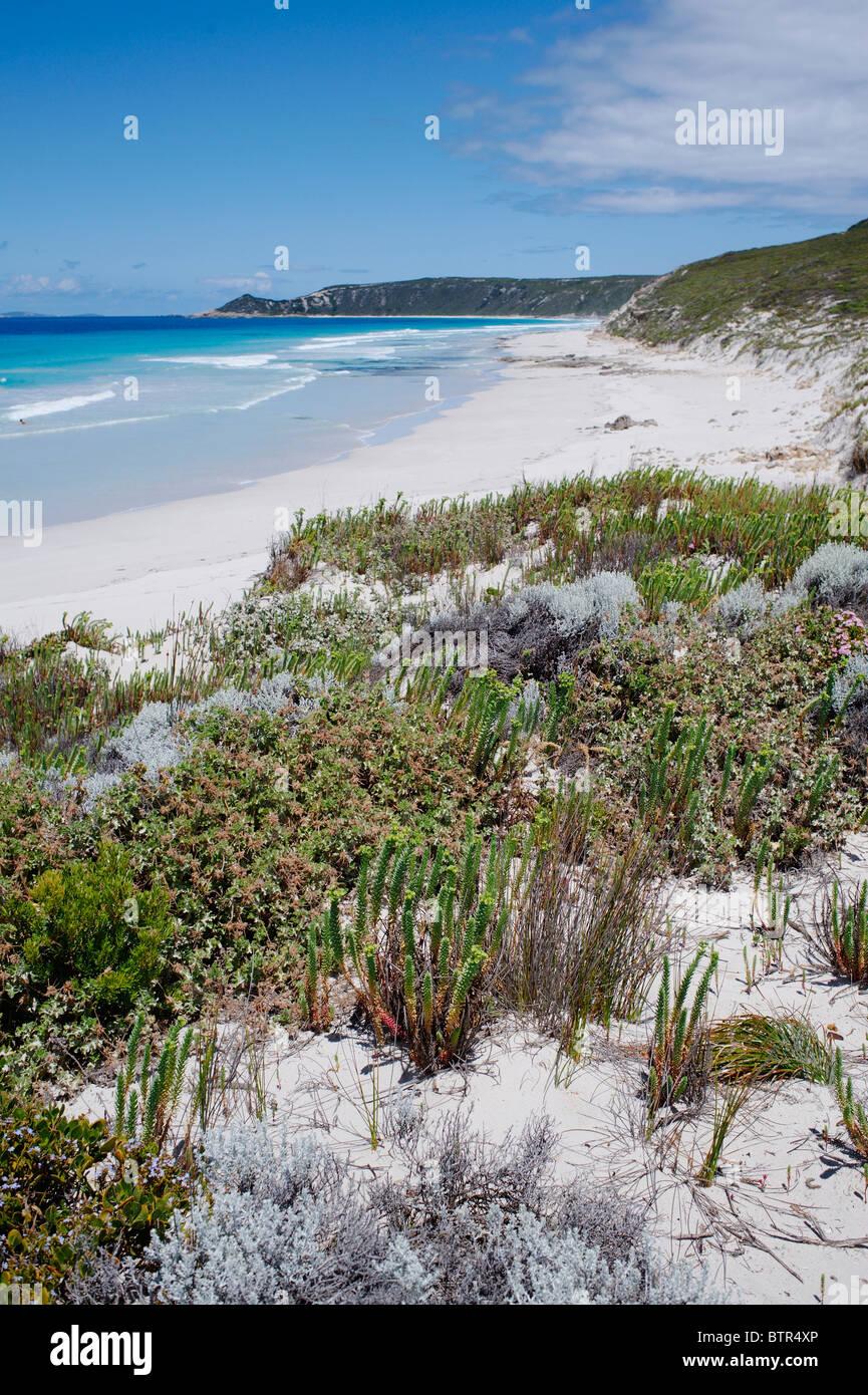 L'Australie, l'espérance, les plantes qui poussent le long de la plage Photo Stock