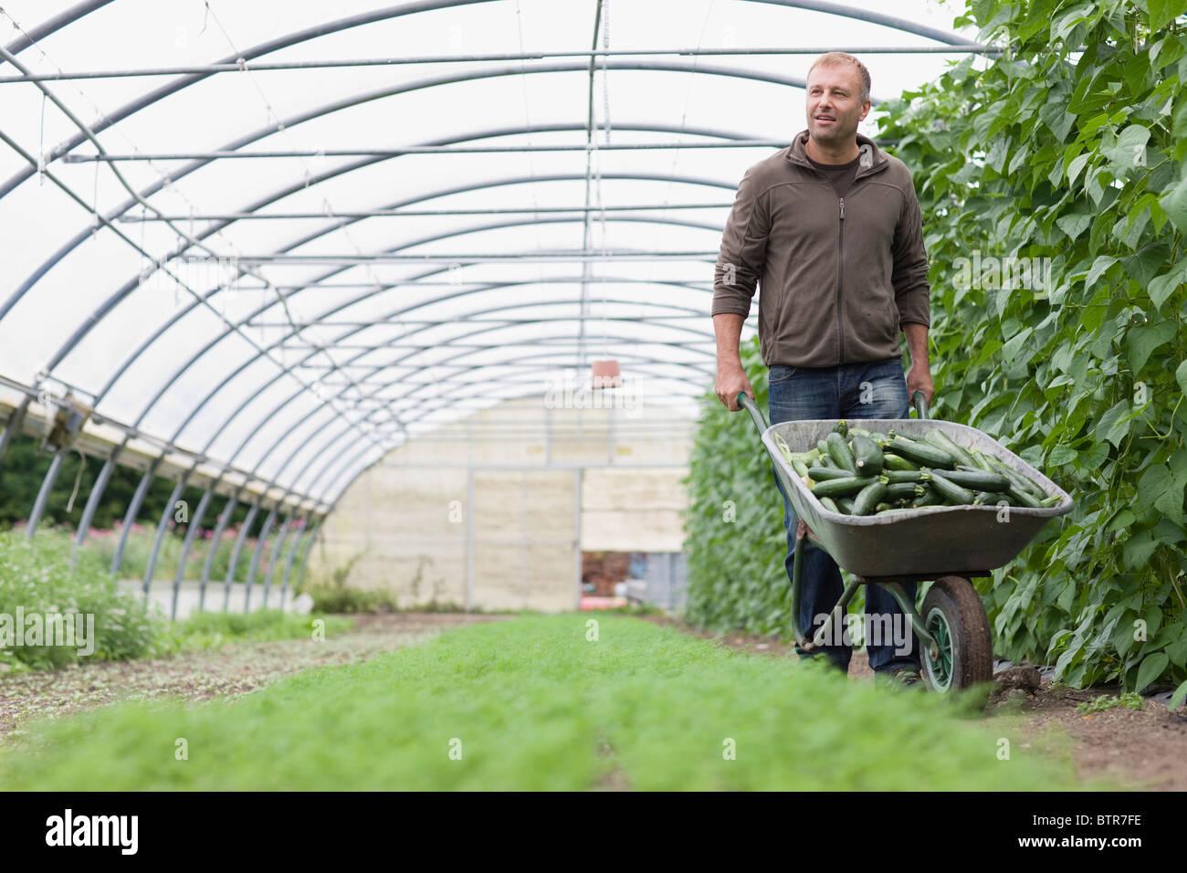 Fruits et légumes d'agriculture Photo Stock