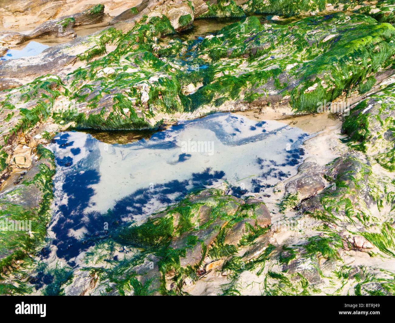 Les algues et rock France Europe Photo Stock