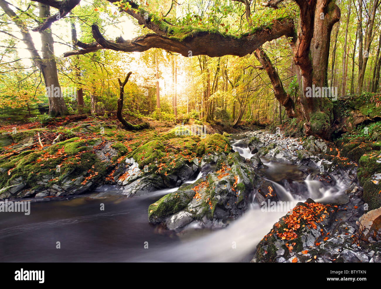 Tollymore Forest Park, l'Irlande du Nord. Photo Stock