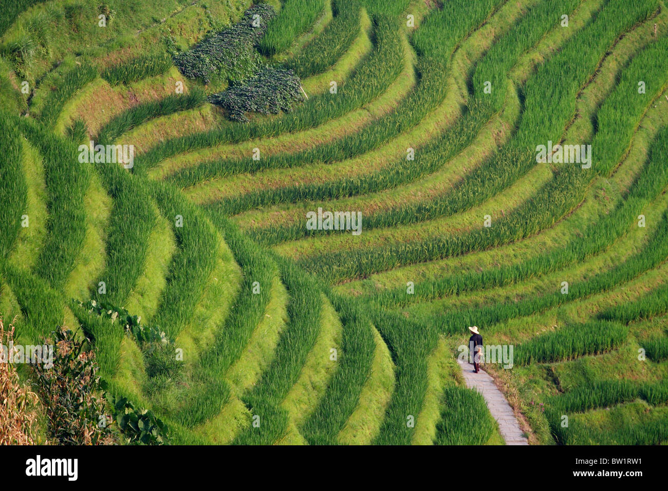 Chine - Dragon's backbone Rice Terraces Photo Stock