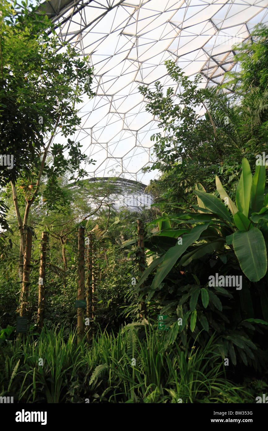 la fort tropicale de lintrieur projet biome eden cornwall uk