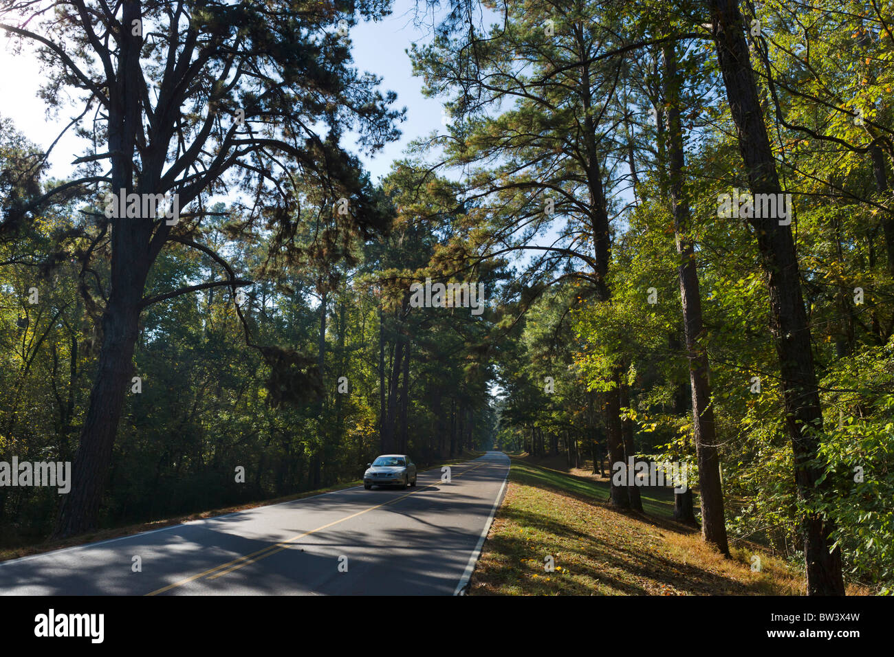 Le Natchez Trace Parkway entre Lorman et Natchez, Mississippi, USA Photo Stock