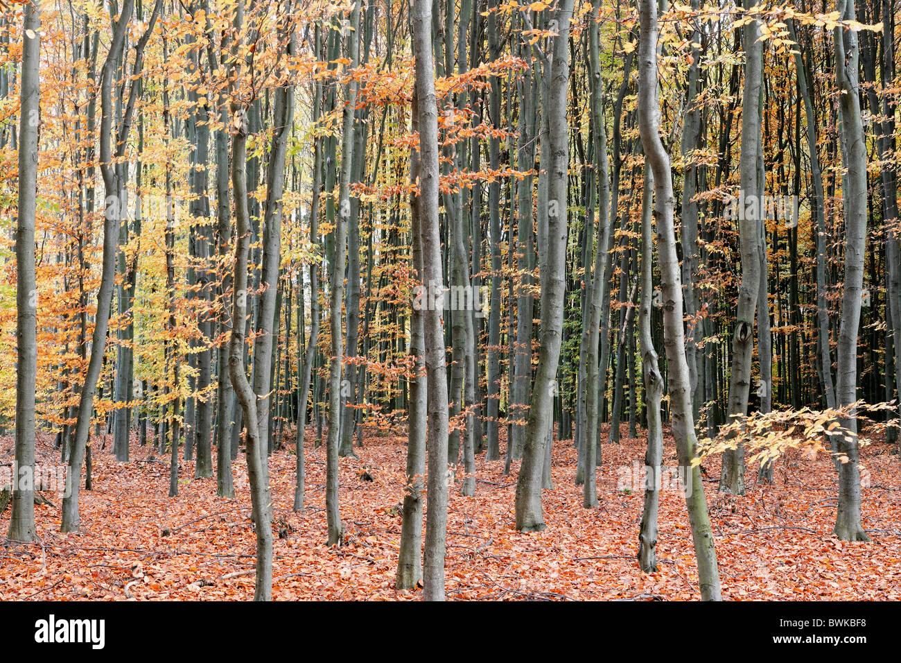 Arrangement Automne fond Fond Ecran couleur Couleur République Tchèque Europe Écosystèmes Écosystèmes Photo Stock