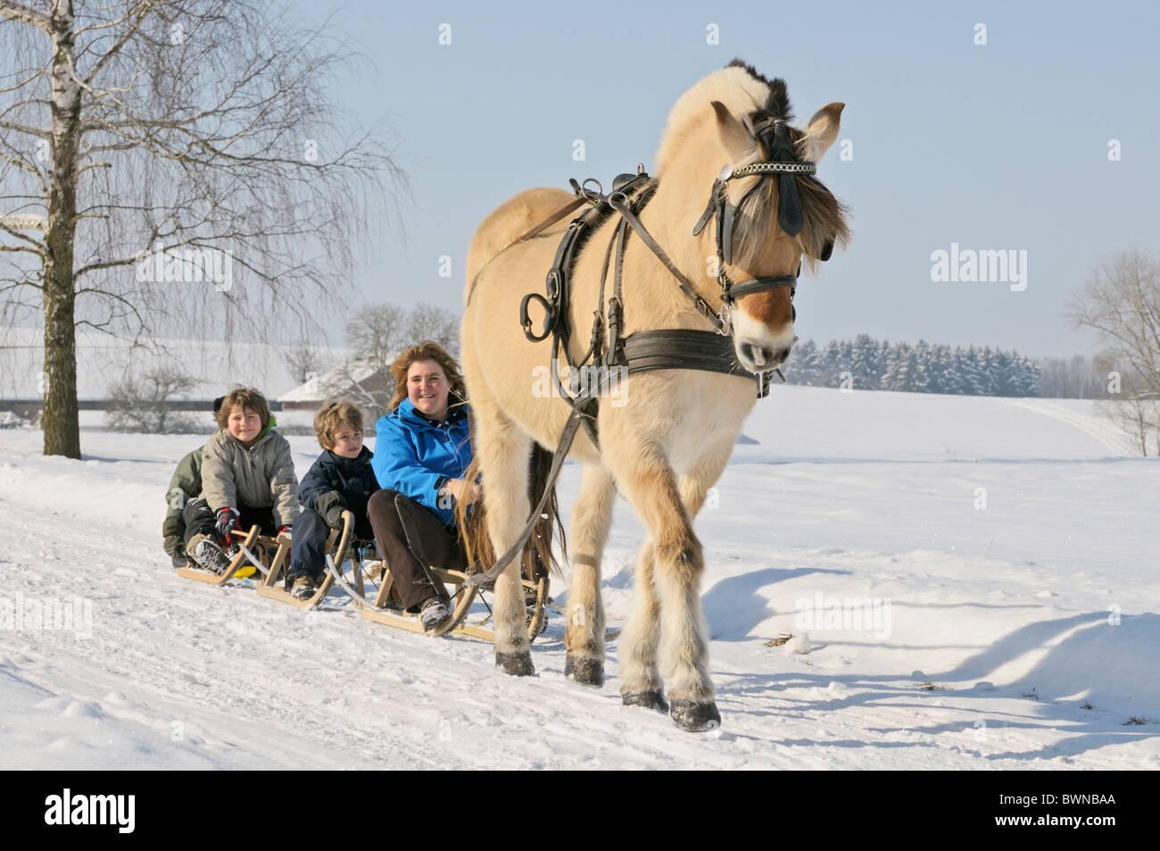 m u00e8re avec fils en carriole tir u00e9e par un cheval norv u00e9gien banque d u0026 39 images  photo stock  33046674