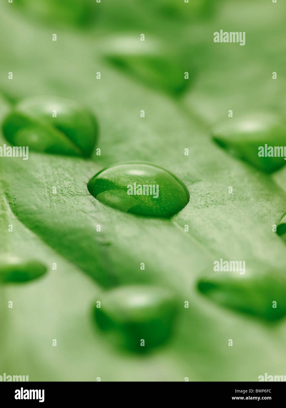 Gouttes d'eau sur une feuille close up Photo Stock
