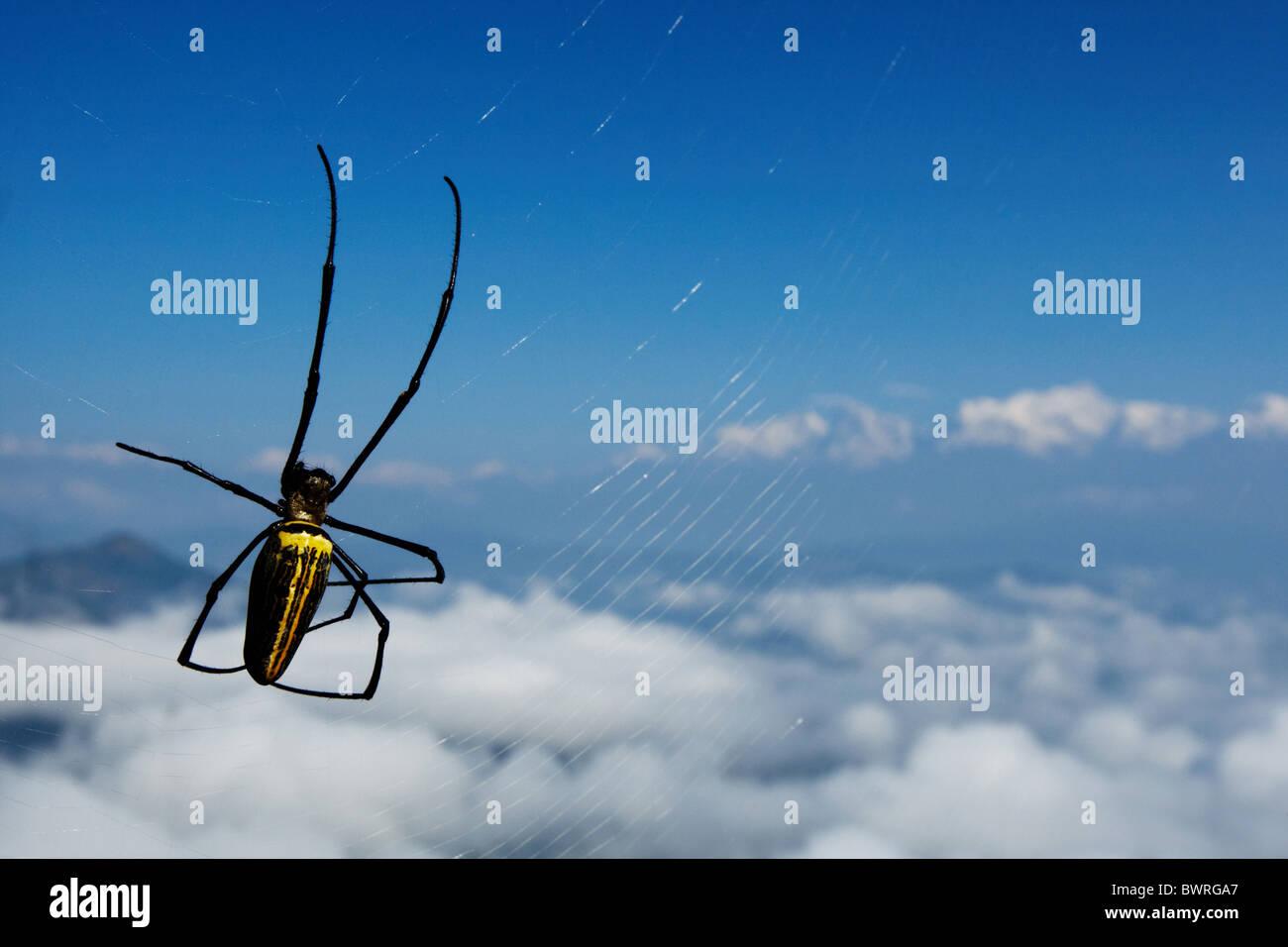Une grande araignée tisse sa toile sur une vue de l'Himalaya vu de Bandipur, Népal le vendredi 30 Photo Stock