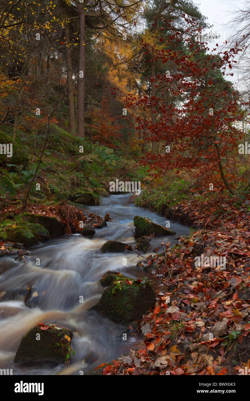 Ruisseau de Wyming. Banque D'Images