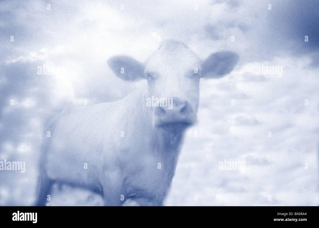 Blue cow nature imagination surréalisme cocasse bête animal dream Banque D'Images