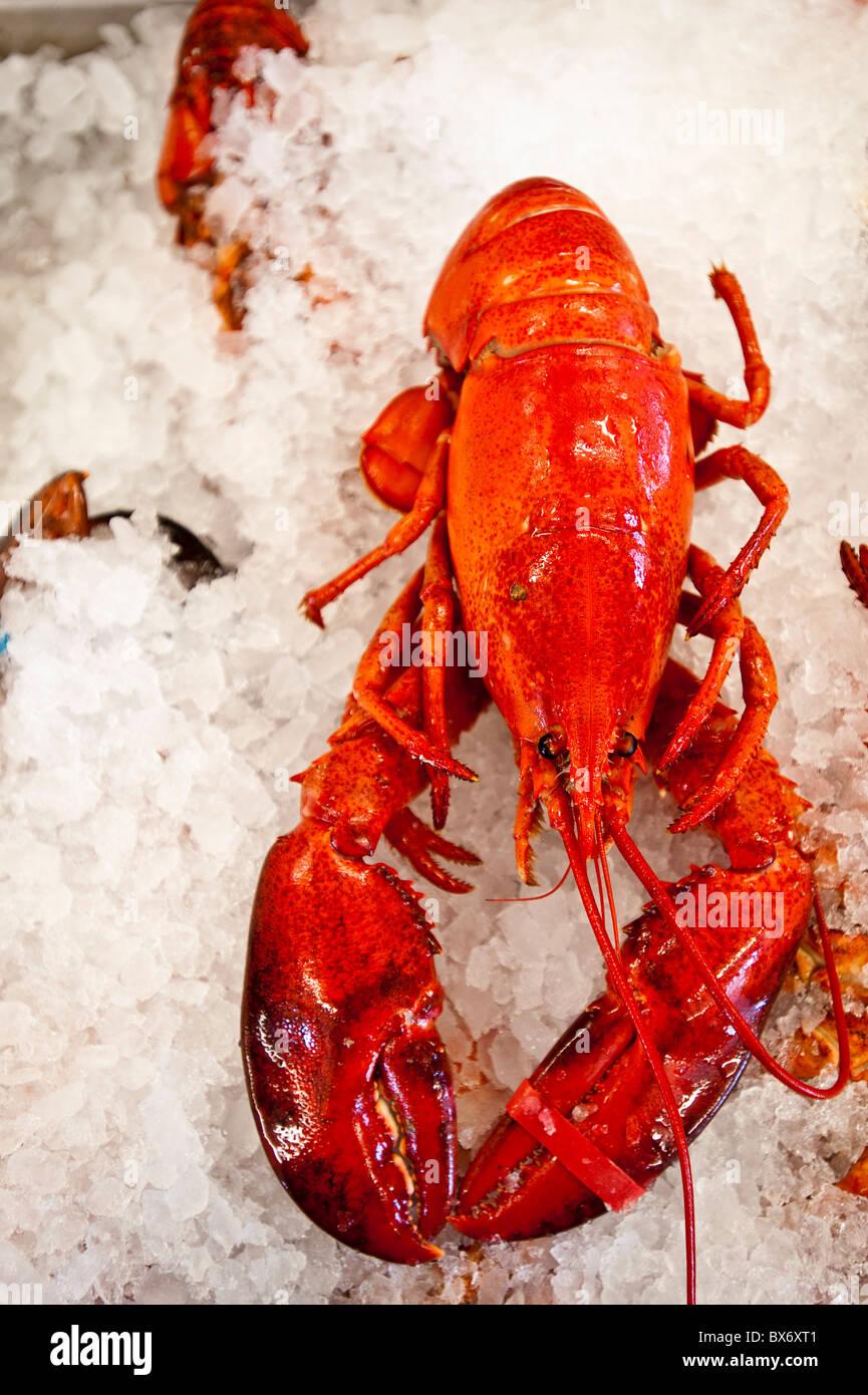 Le homard à vendre à Alma, Nouveau-Brunswick, Canada, Amérique du Nord Banque D'Images