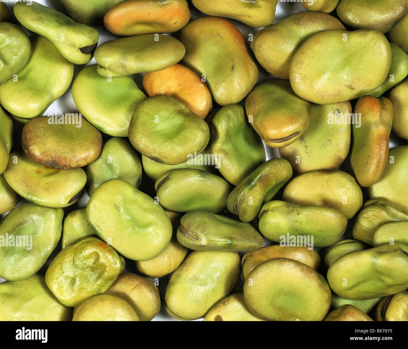 Graines de fève (Vicia faba) Photo Stock