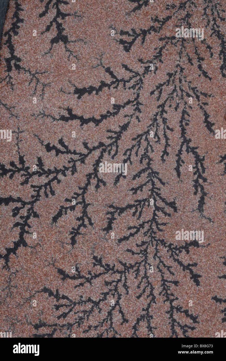 Le manganèse dendrite pseudofossils. Photo Stock