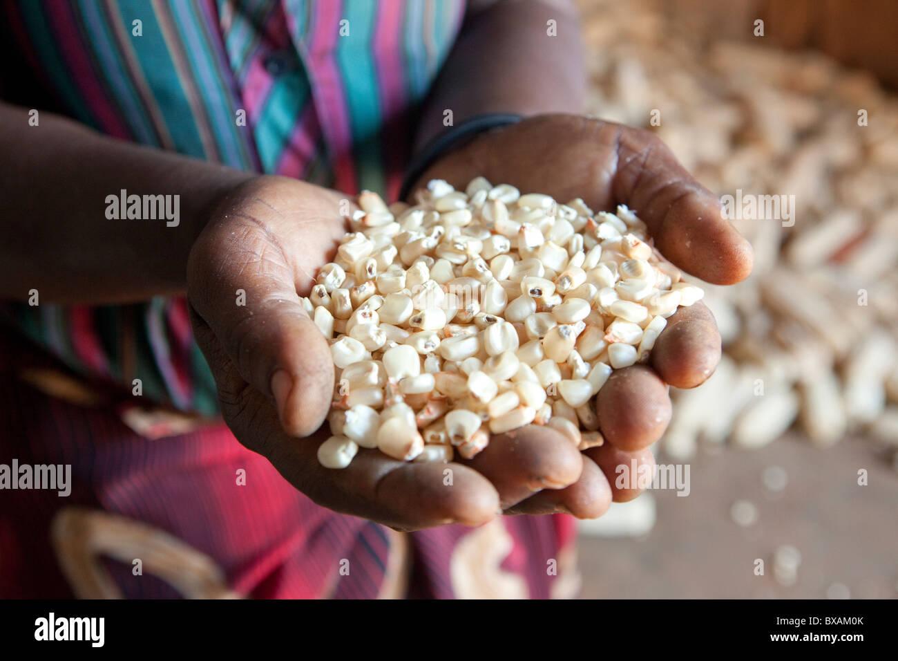 Une femme est titulaire d'une poignée de grains de maïs à Iganga, Ouganda, Afrique de l'Est Photo Stock