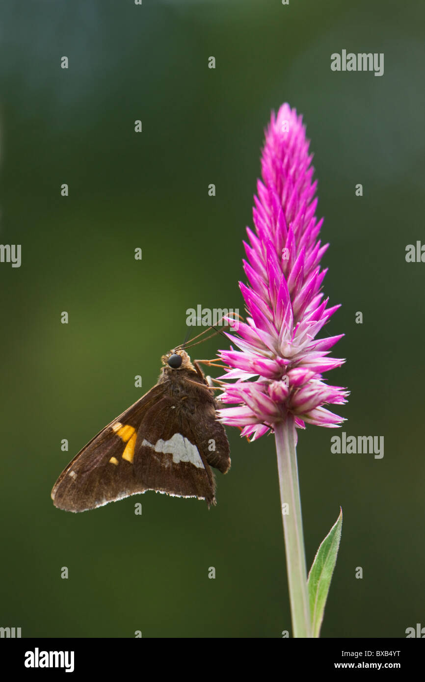 Close-up of butterfly on flower head Photo Stock
