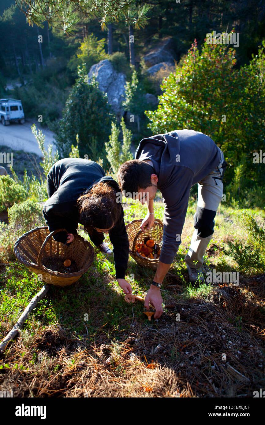 Les ramasseurs de champignons du Parc d''Els Ports Catalogne Espagne Photo Stock