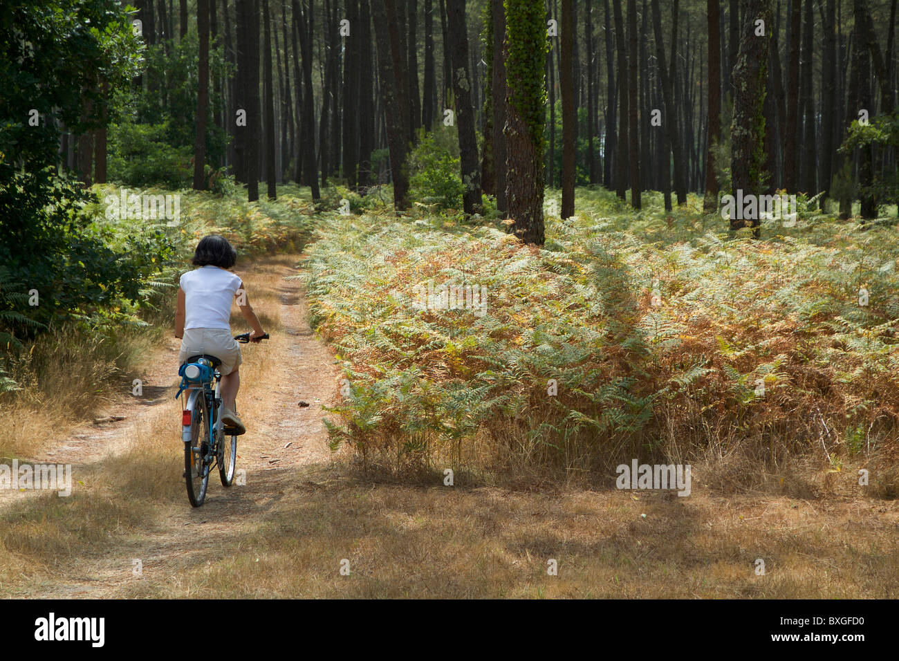 Femme à vélo dans la forêt des Landes, Aquitaine, France. Photo Stock