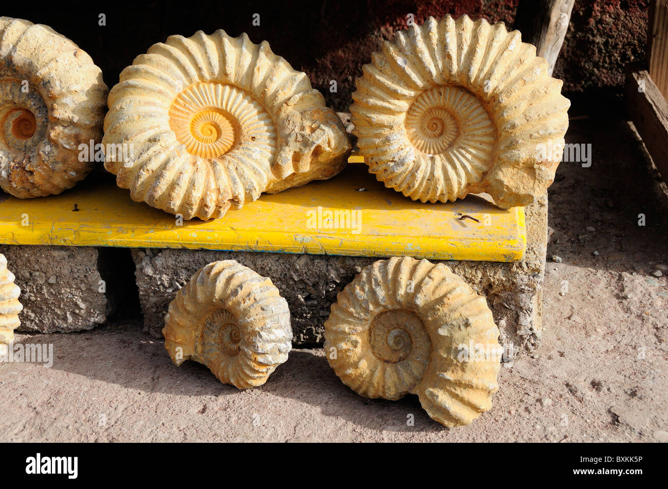 Les fossiles (faux) pour la vente, Tizi-n-test pass Photo Stock